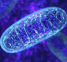 Control Your Mitochondria or They Will Control You