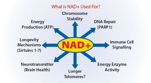 What is NAD+ effect on disease and aging